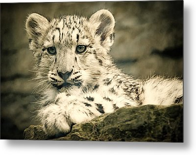 Cute Snow Cub Metal Print
