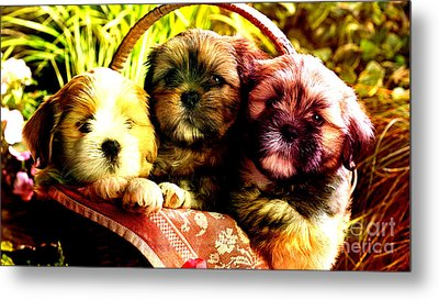 Cute Terrier Puppies Metal Print by Marvin Blaine