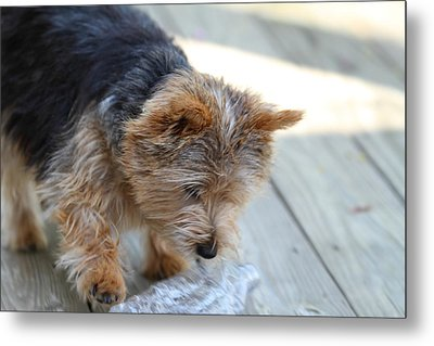 Cutest Dog Ever - Animal - 011313 Metal Print by DC Photographer