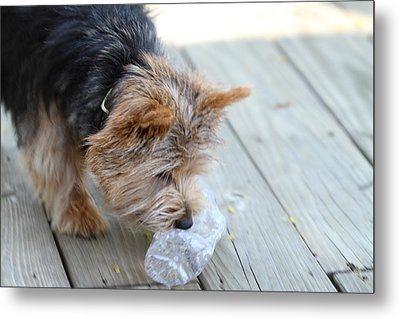 Cutest Dog Ever - Animal - 011314 Metal Print by DC Photographer