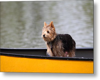 Cutest Dog Ever - Animal - 011342 Metal Print by DC Photographer