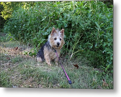 Cutest Dog Ever - Animal - 011350 Metal Print by DC Photographer