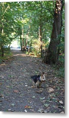 Cutest Dog Ever - Animal - 011355 Metal Print