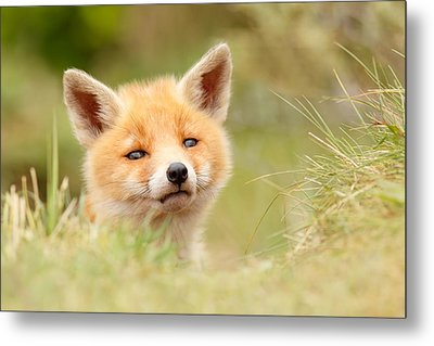 Cutie Face _red Fox Kit Metal Print by Roeselien Raimond