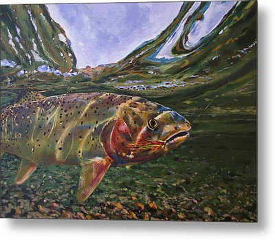 Cutthroat Hooked In The Ripple Metal Print