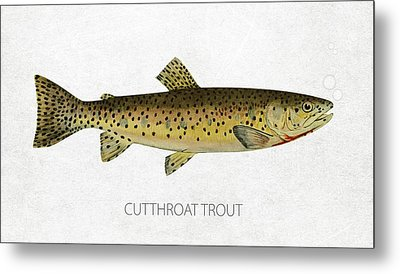 Cutthroat Trout Metal Print by Aged Pixel