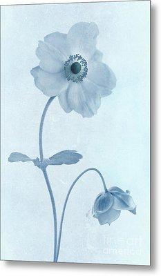 Cyanotype Windflowers Metal Print by John Edwards