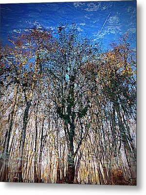 Cypress Abstract 1 Metal Print by Sheri McLeroy