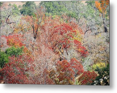 Metal Print featuring the photograph Cypress Beauty by David  Norman