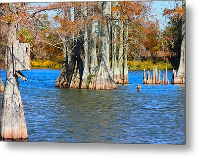 Cypress Birdhouse  Metal Print