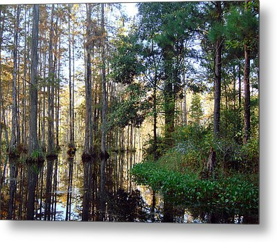Metal Print featuring the photograph Cypress Gardens 2 by Ellen Tully