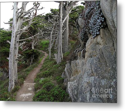 Cypress Grove Trail Metal Print by James B Toy