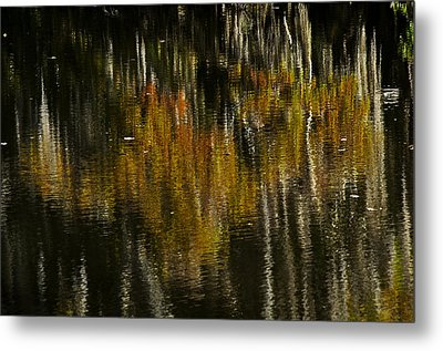 Metal Print featuring the photograph Cypress In Reflection by Andy Crawford
