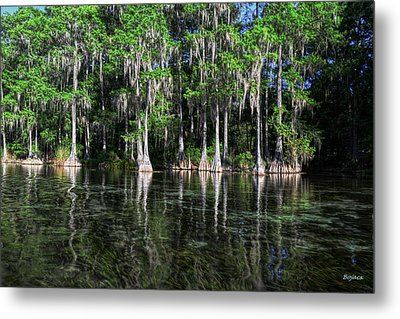 Cypress On Rainbow Metal Print by Bob Jackson