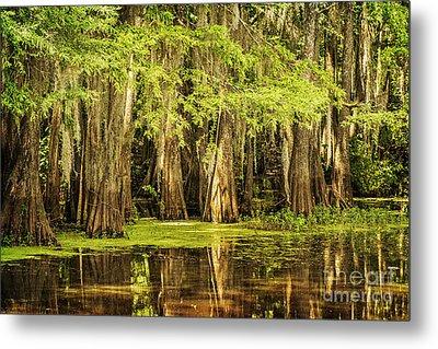 Cypress Reflection On Caddo Lake Metal Print
