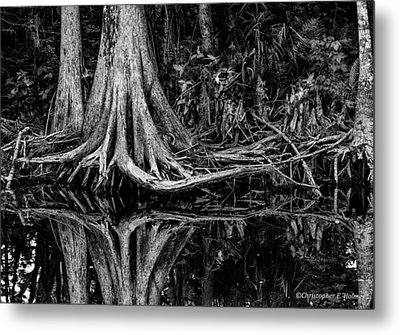 Cypress Roots - Bw Metal Print by Christopher Holmes