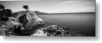 Cypress Tree At The Coast, The Lone Metal Print by Panoramic Images