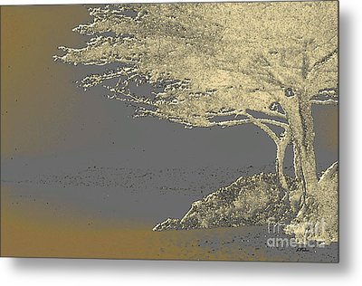 Cypress Tree On Beach Metal Print by Linda  Parker