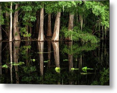 Cypress Trees In Suwanee River Metal Print