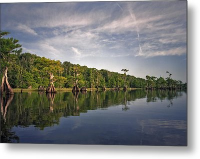 Cypress Wall. Blue Cypress Lake. Metal Print by Chris  Kusik