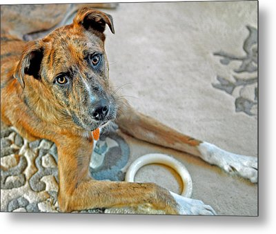 Cyrus Metal Print by Lisa Phillips