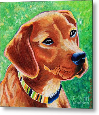 Dachshund Beagle Mixed Breed Dog Portrait Metal Print