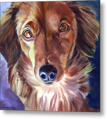 Dachshund Sparkle Eyes Metal Print by Lyn Cook