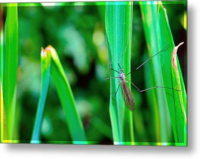 Daddy Long Legs  Metal Print by Tommytechno Sweden