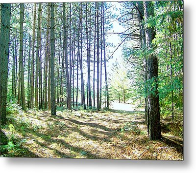 Dad's Woods I Metal Print by Shirley Moravec
