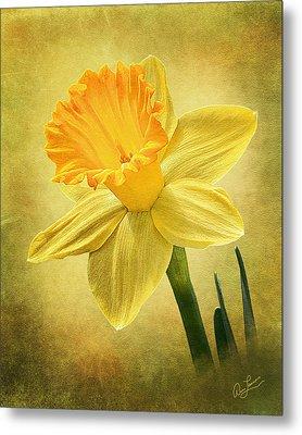 Daffodil Metal Print by Ann Lauwers