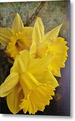 Metal Print featuring the photograph Daffodil Burst by Diane Alexander