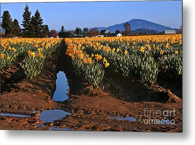Metal Print featuring the photograph Daffodil Field After A Spring Rain by Valerie Garner