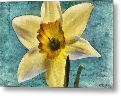 Daffodil Metal Print by Jeff Kolker