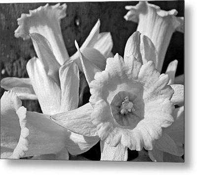 Daffodil Monochrome Study Metal Print by Chris Berry