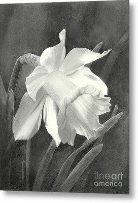 Daffodil Metal Print by Nicola Butt