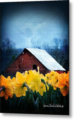 Daffodils And A Red Barn Metal Print