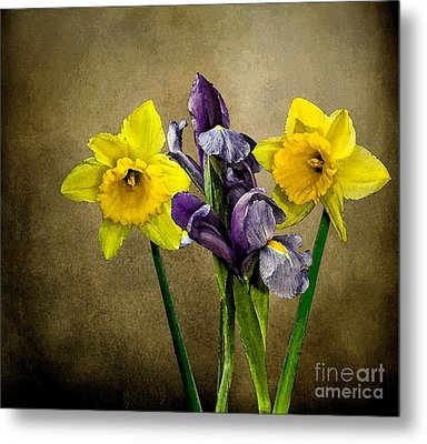 Daffodils And Iris Metal Print by Shirley Mangini