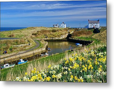 Metal Print featuring the photograph Seaton Sluice Harbour Daffodils by Les Bell