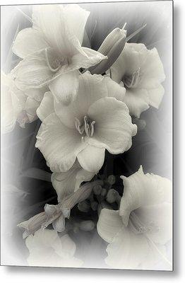 Daffodils Emerge Metal Print by Daniel Hagerman