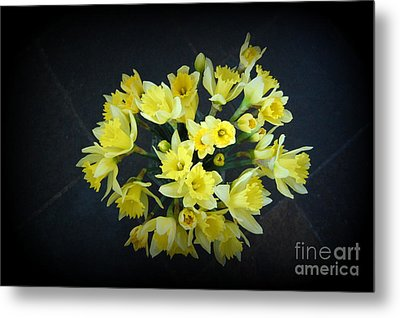 Daffodils Reaching Out Metal Print