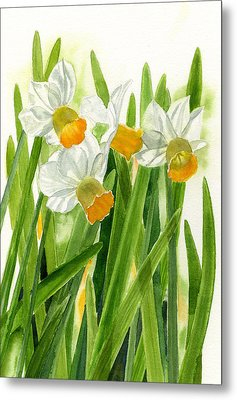 Daffodils With Green Leaves Metal Print by Sharon Freeman