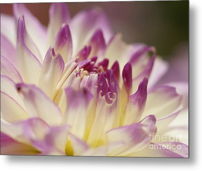 Metal Print featuring the photograph Dahlia 2 by Rudi Prott