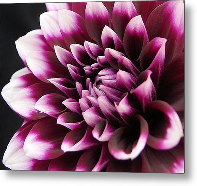 Metal Print featuring the photograph Dahlia Delightful by Kathi Mirto