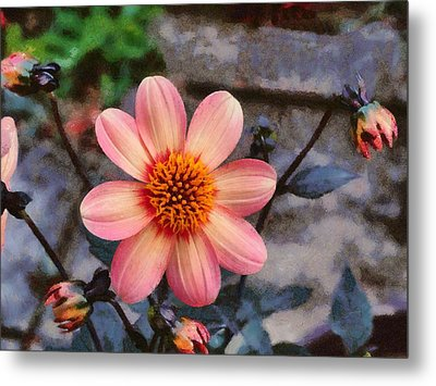 Dahlia First Love Metal Print by Paul Gulliver