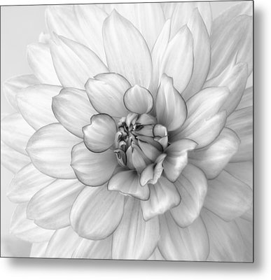 Dahlia Flower Black And White Metal Print