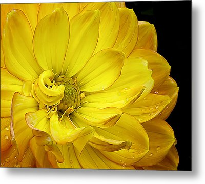 Metal Print featuring the photograph Dahlia Pedals by Gary Neiss