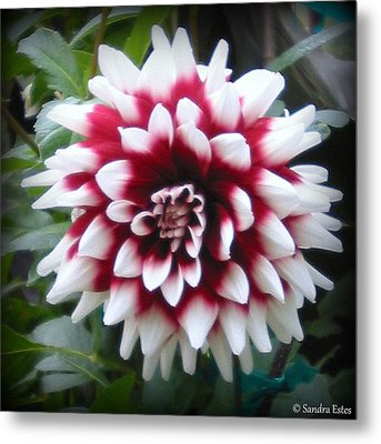 Metal Print featuring the photograph Dahlia by Sandra Estes