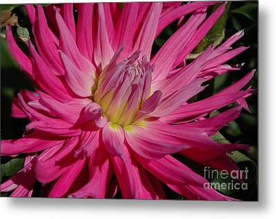 Metal Print featuring the photograph Dahlia X by Christiane Hellner-OBrien