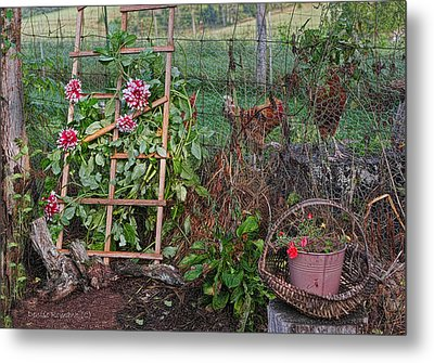 Dahlias And Chickens Metal Print by Denise Romano