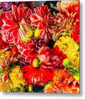 Dahlias Summer Color Metal Print